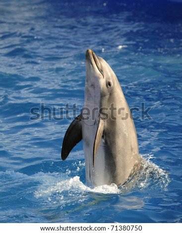 Portrait of the dolphin who has been put out from water. - stock photo