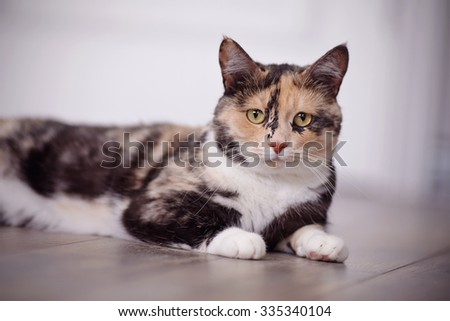 Portrait of the domestic multi-colored cat lying on a floor. - stock photo