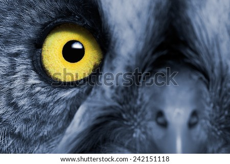 Portrait Of The Great Grey Owl (Strix nebulosa). Night's effect. - stock photo