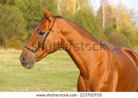 Portrait of the horse in the field - stock photo