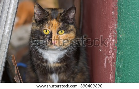 Portrait of three colored cat in its street shelter - stock photo