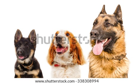 Portrait of three dogs, closeup, isolated on white background - stock photo