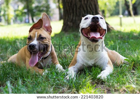 Portrait of two happy dogs in the park  - stock photo
