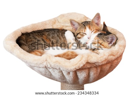 Portrait of two kittens on isolated background - stock photo