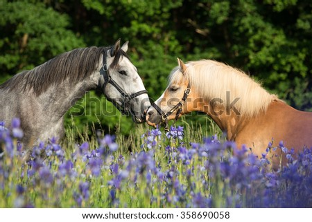 Portrait of two nice horses in blooming meadow - stock photo