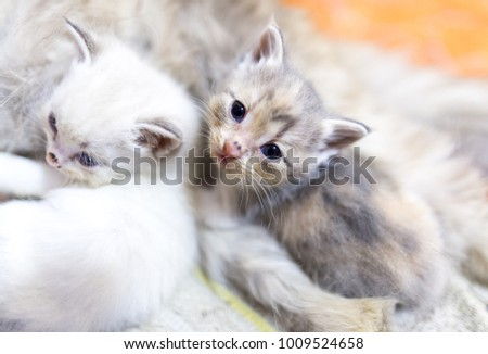 Portrait of two small kittens near mom
