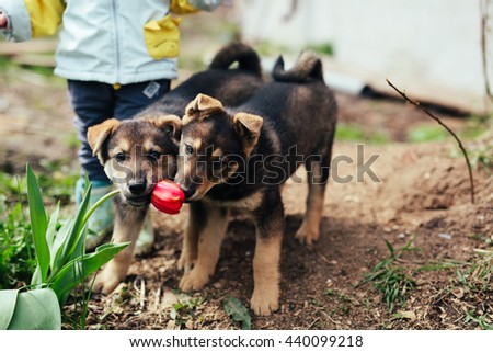 portrait of two small puppies biting tulip