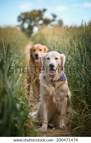 Portrait of two young dogs resting on a dirt road - stock photo