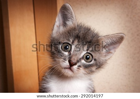 Portrait of unhappy kitten with big eyes looking at the camera