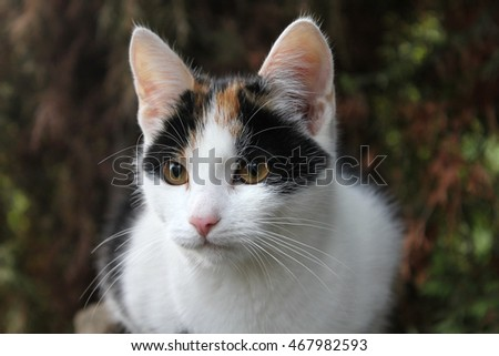 Portrait of white cat, dark background