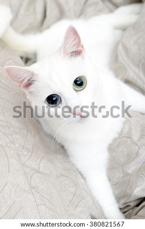 Portrait of white cat with big eyes.