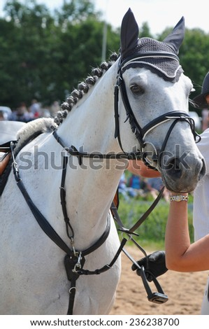 Portrait of white horse in summer - stock photo