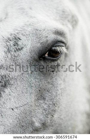 portrait of white horse - small depth of field, focus at the eye - stock photo