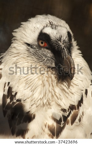 Portrait of white vulture on a sunny day - stock photo
