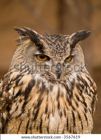 Portrait of wise owl with beautiful eyes