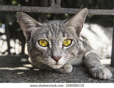 Portrait of yellow eyed cat - stock photo