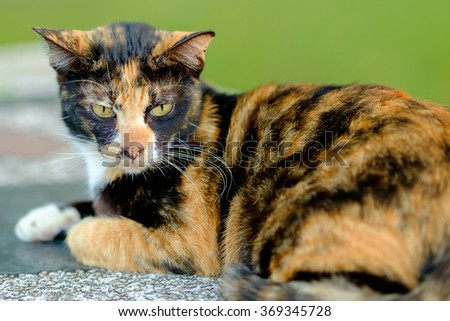 Portrait of yellow-eyed cat
