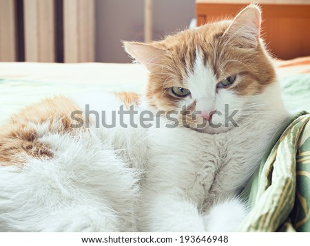 Portrait of yellow sad sick cat lying at home