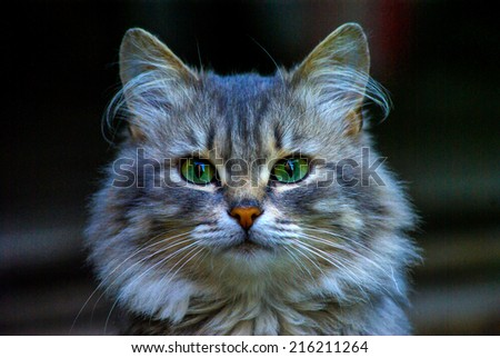 Portrait of young cat by a large plan - stock photo
