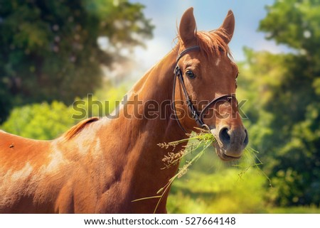 Portrait of young chestnut horse.