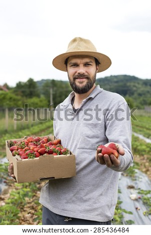 Portrait of young farmer in a strawberry field presenting his harvest,red fresh picked strawberries