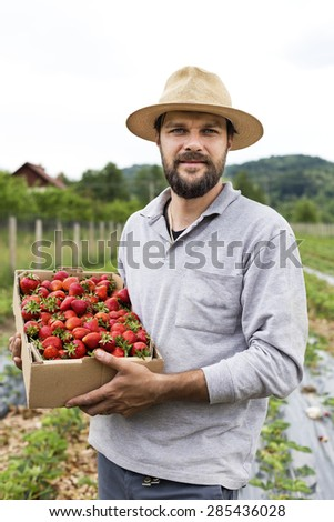 Portrait of young farmer in strawberry field holding a cardboard box full with fresh red strawberries - stock photo