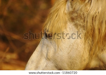 Portrait picture of a beautiful white horse - stock photo