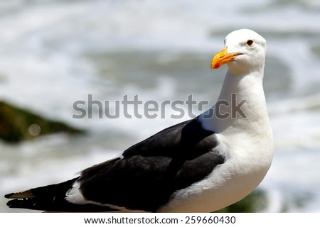 Portrait shot of a seagull with water in the background. - stock photo
