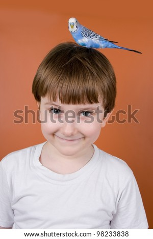 Portrait smiling boy with a parrot on his head on a brown background - stock photo