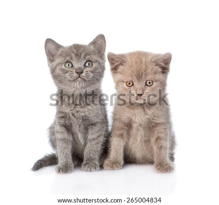Portrait two cute kittens. isolated on white background - stock photo