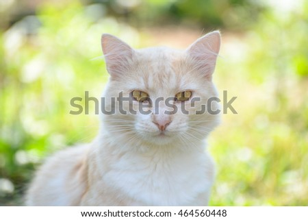 Portrait yellow fluffy cat