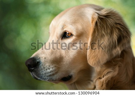 Portrait young dogs and blur background - stock photo