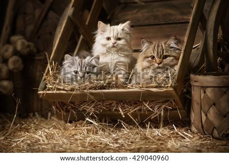 Portraits fluffy tabby kittens sleeping in an old barrel with a straw in the attic - stock photo
