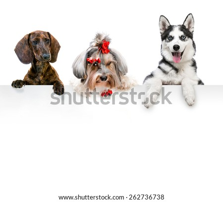 portraits of different breeds of dogs for the white banner - stock photo