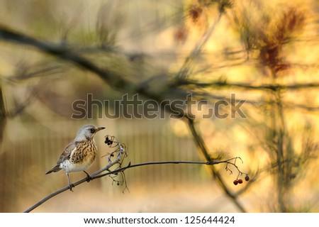 Posing a bird - stock photo