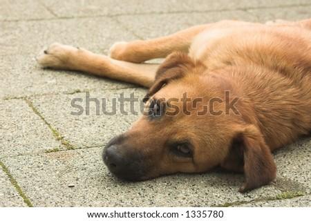 posing dog - stock photo