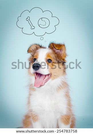 Positive smiling border collie puppy with thinking bubble - stock photo