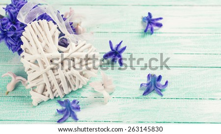 Postcard with decorative heart and fresh spring blue hyacinth  on turquoise painted wooden planks. Selective focus. Place for text. Toned image.  - stock photo