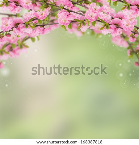 Postcard with fresh spring flowering bush  almond and place for your text. Abstract background for design. Spring background. Floral background. - stock photo
