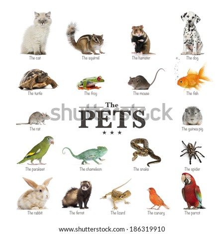 poster of pets in English - stock photo