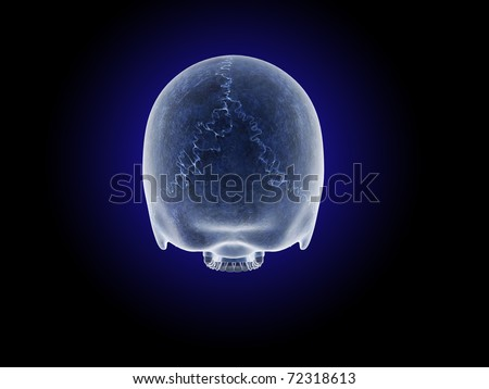 Posterior View of Skull without Mandible - stock photo