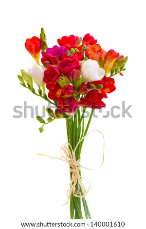 posy of red freesia flowers isolated on white background - stock photo