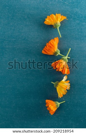 Pot Marigolds or English Marigolds (Calendula officinalis), fresh blossoms - stock photo