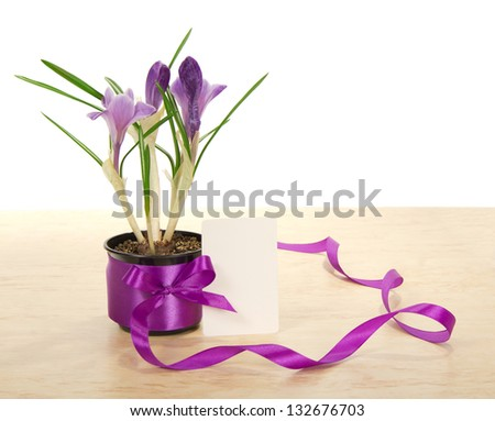 Pot of crocuses on a table and a card isolated on the white