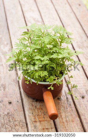 pot plants on top wood table