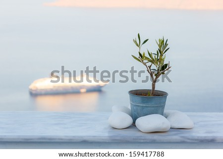 Pot with decorative olive oil tree on a balcony with cruise ship at the background - stock photo
