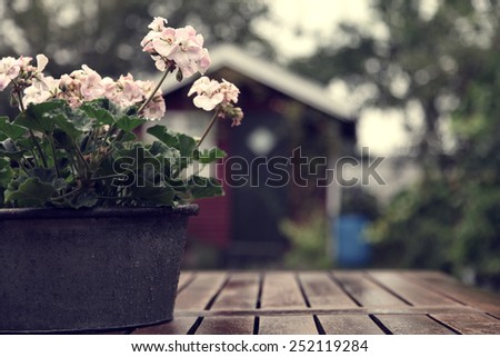 Pot with flowers in rustic garden - stock photo