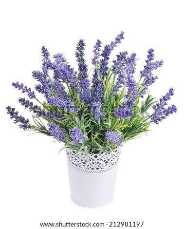 pot with lavender isolated on a white background