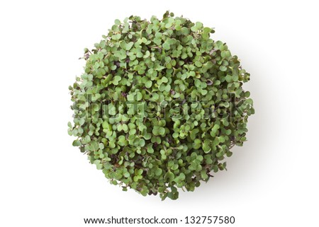 Pot with newborn sprouts of radish. Top view. Isolated on white. - stock photo