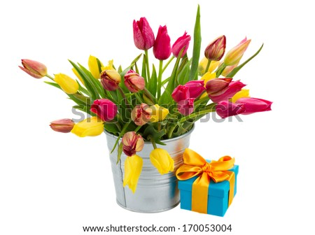 Pot with  pink and yellow spring  tulips with gift box   isolated on white background